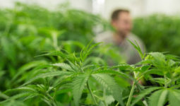 Cann Group Limited (ASX:CAN) Delivers Its First Shipment of Australian Sourced Medical Cannabis
