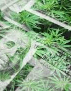 Gearing Up for the Pot Stock Election Run (MJNA, CRLBF, MCTC, CURLF)