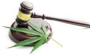 Who Stands to Win from the New Marijuana Bill? (CGC, ACB, SGMD, CURLF, TLRY)