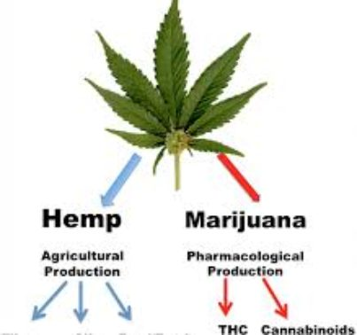 Who Will Lead the Hemp-related Space in 2020? (TCNNF, ACB, TMGI, CRLBF)