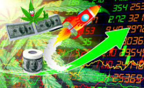 Why CBD Stocks are Rising Stars (YCBD, MJNA, CBGL, CBDD, CWBHF)