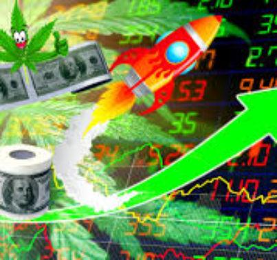 Why CBD Stocks are Rising Stars (YCBD, MJNA, CBGL, CBDD, CWBHF)