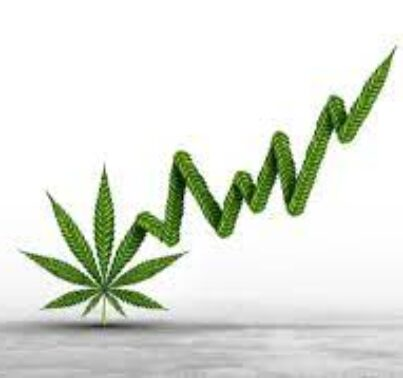 Is Cannabis the Next Meme Stock Trader Target? (SGMD, TLRY, CGC, SNDL, GRWG, ACB)